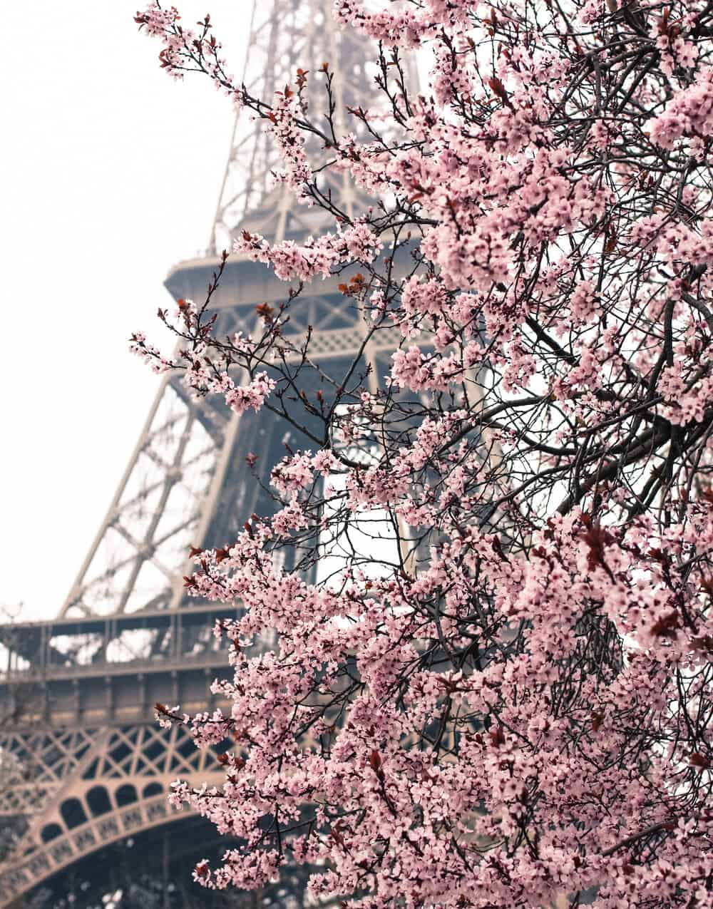 Shop Spring in Paris print here
