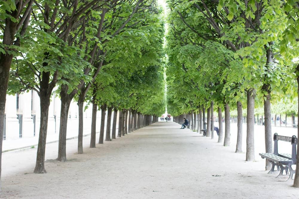my favorite walking shoes for paris everyday parisian