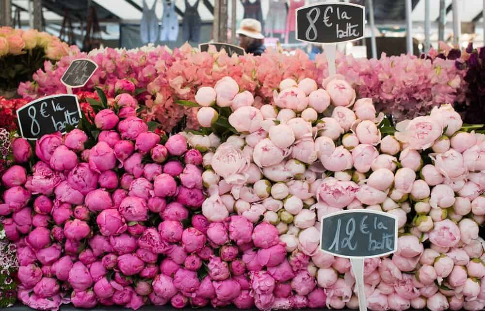 pink peonies at the market in paris france rebecca plotnick