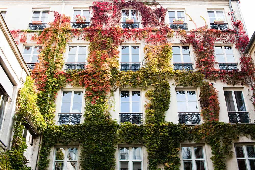 Shop Autumn Ivy in Paris Print Here