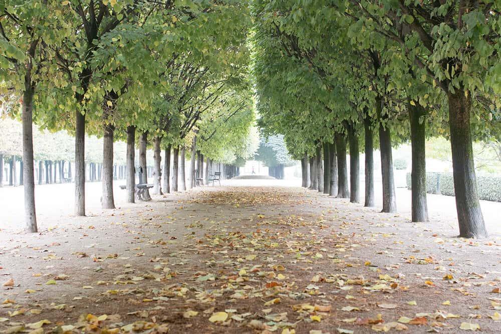 Shop Fall in Palais Royal Paris Print Here