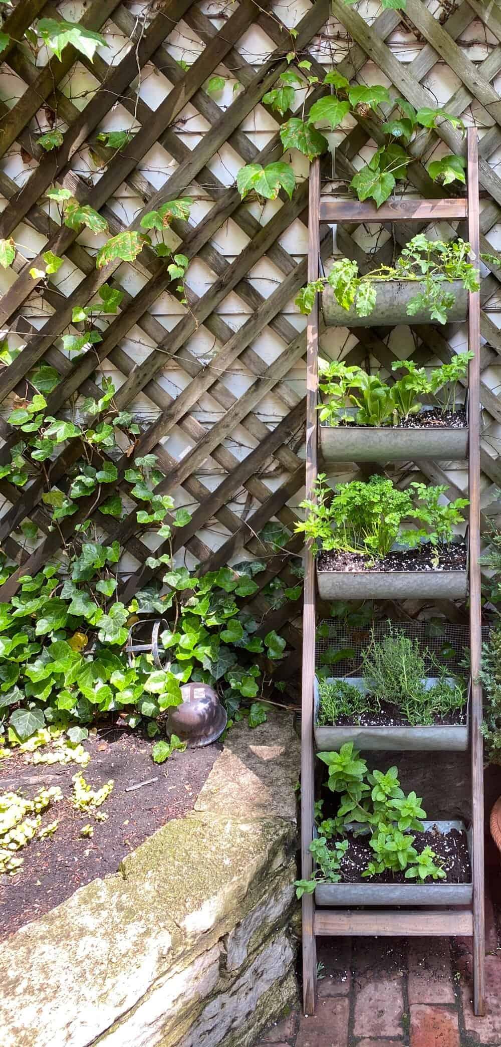 my first herb garden