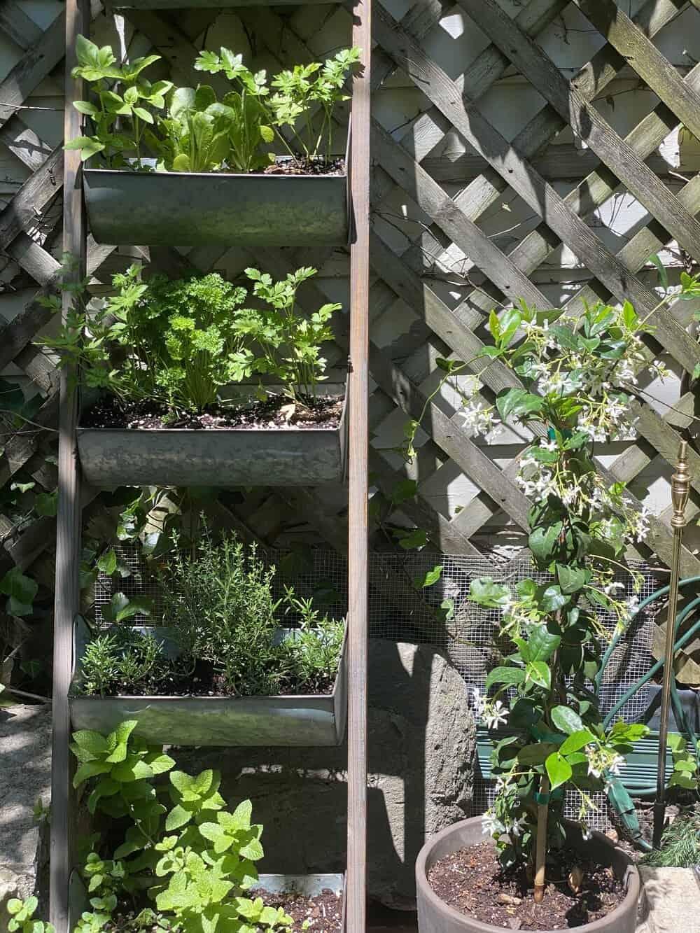 my first herb garden everyday parisian