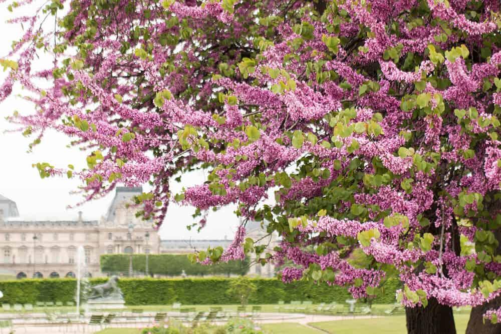 Shop Spring Walk in the Tuileries Print