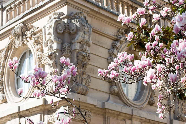 Shop Magnolias in Bloom in Parc Monceau Print Here