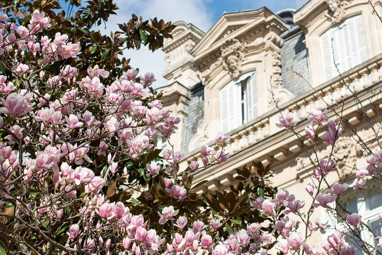 Shop Spring Blossoms in Parc Monceau Print Here