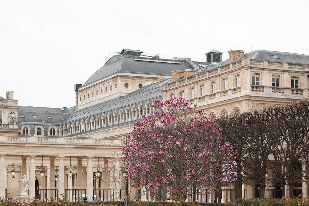 where to see magnolias in bloom in Paris everyday parisian
