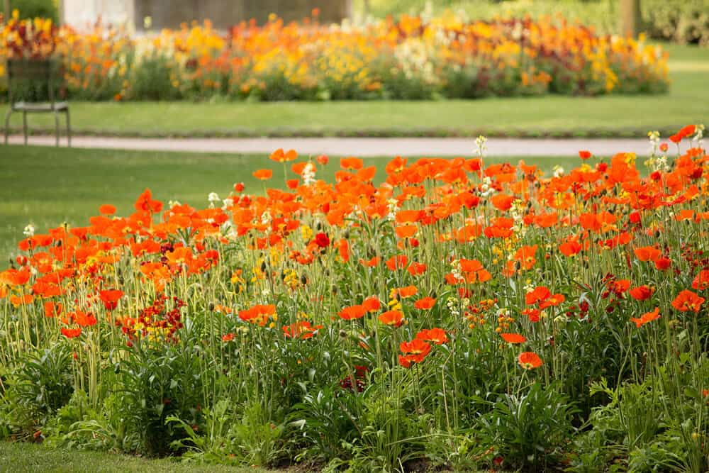 Shop Spring Poppies in Luxembourg Gardens Print Here