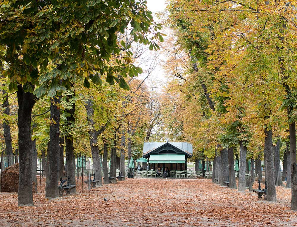 Shop Fall in Luxembourg Gardens Paris Print Here