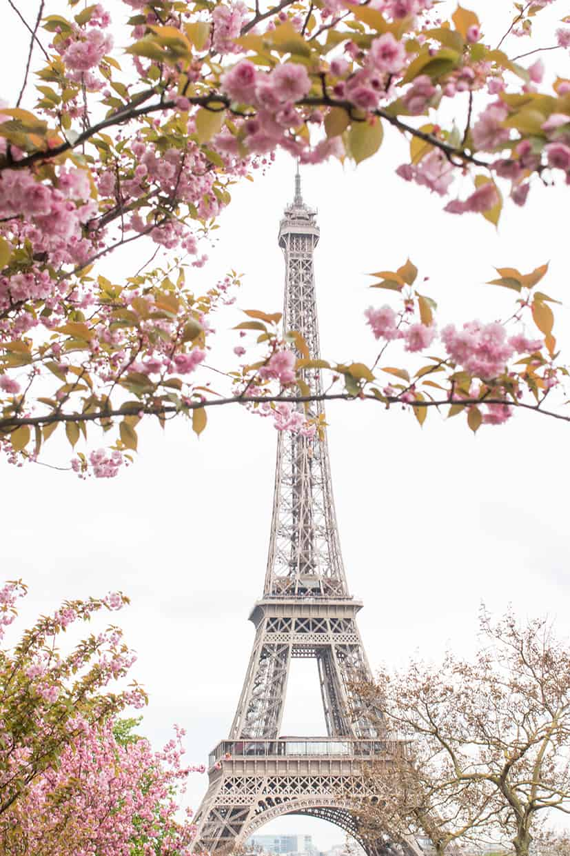 Shop Eiffel Tower Spring Cherry Blossoms Print Here