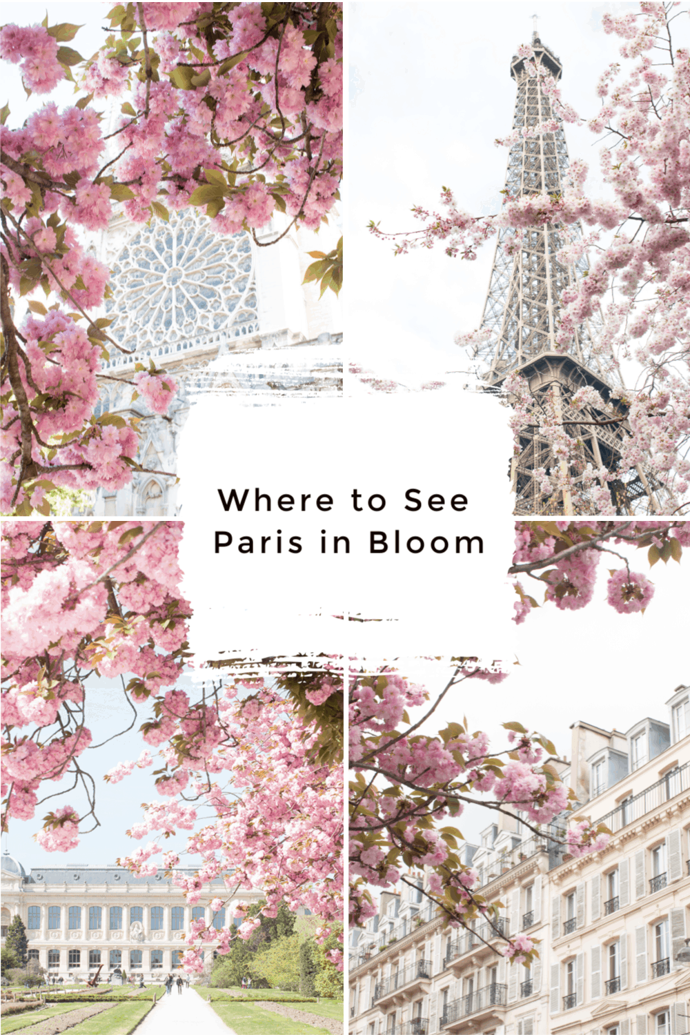 when to see paris in bloom everyday parisian