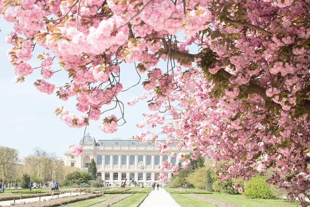 Shop Paris Jardin des Plants Spring Blossom Print Here