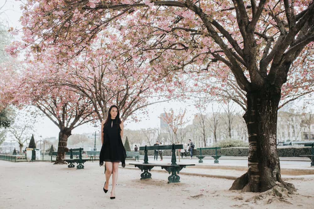 spring cherry blossoms notre dame rebecca plotnick photo by iheartparisfr