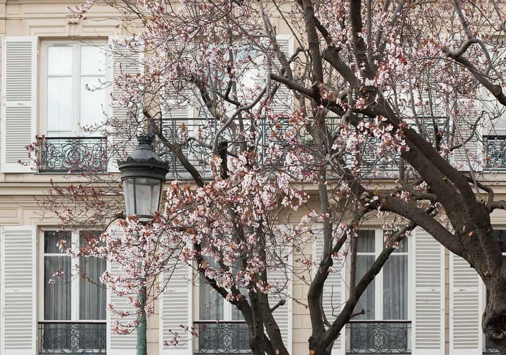 the paris diaries spring march 2019 everyday parisian