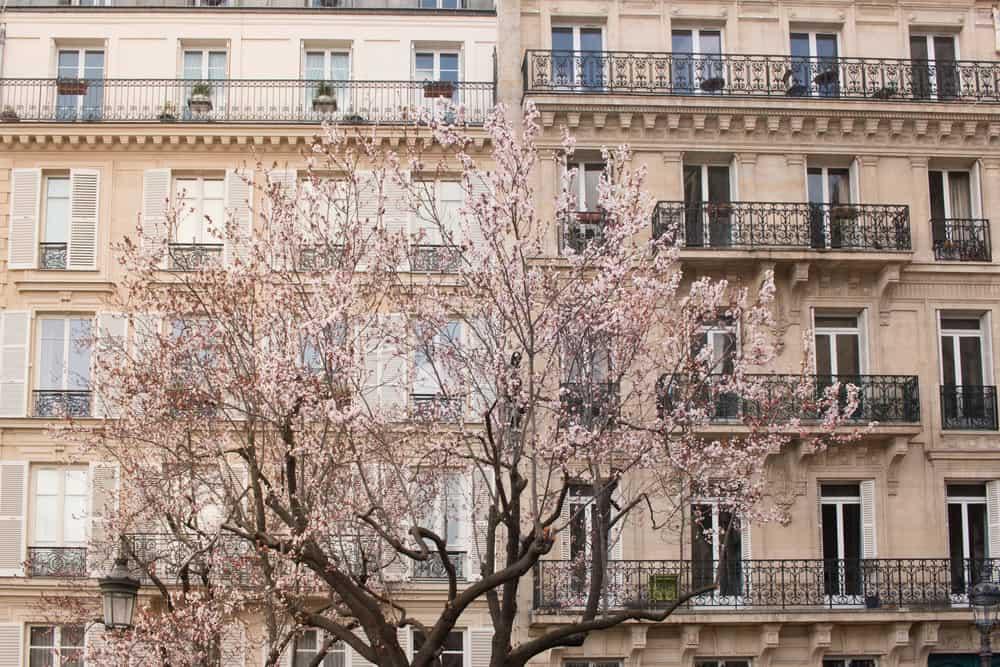 spring in paris everyday parisian