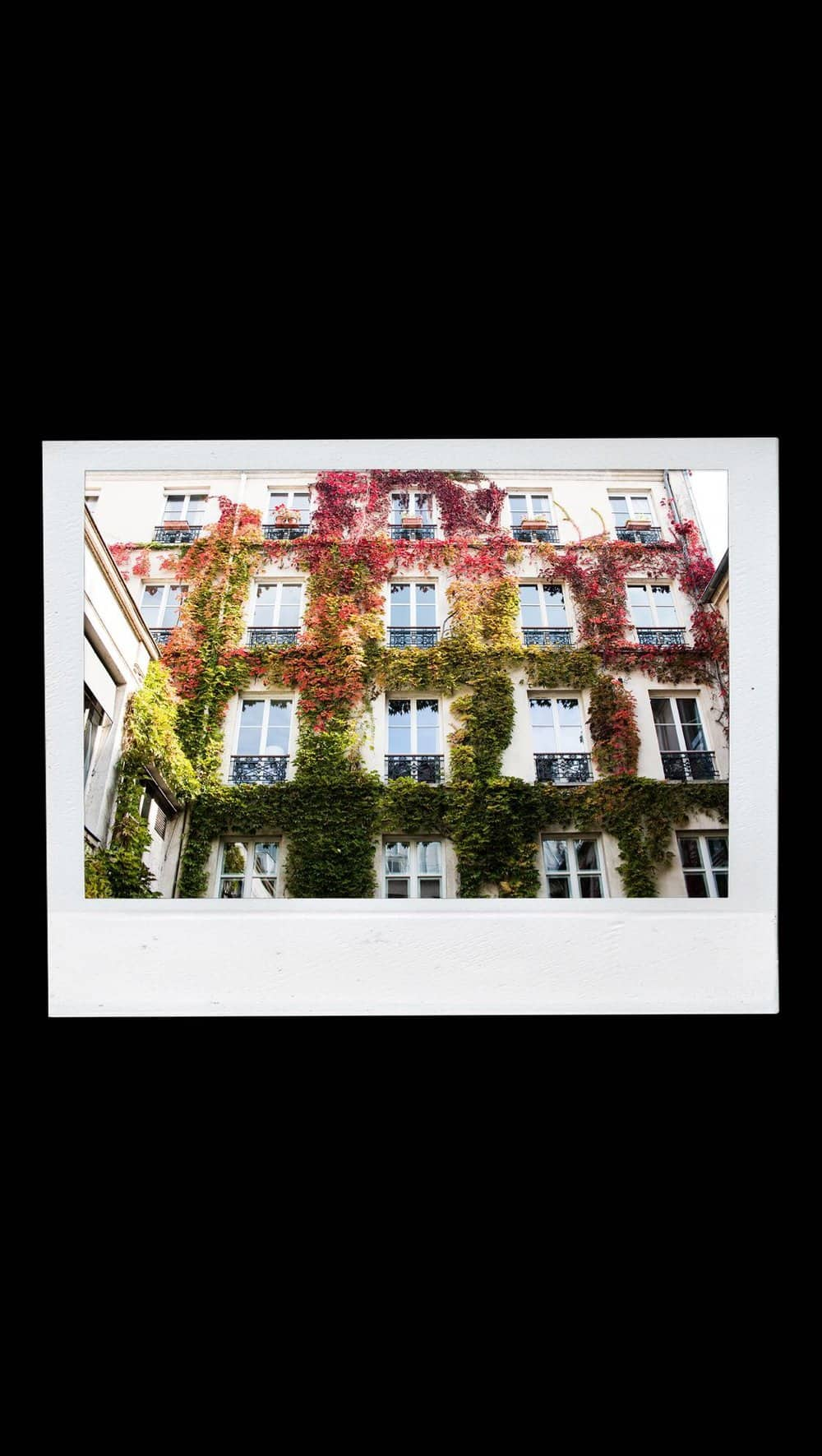 autumn postcards from paris by rebecca plotnick