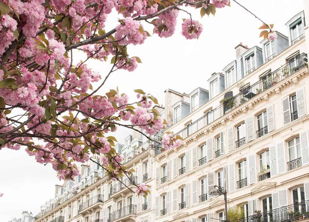 blossom season in Paris by Rebecca Plotnick