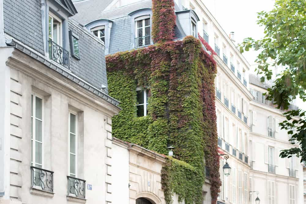 best articles to read about paris from everyday parisian