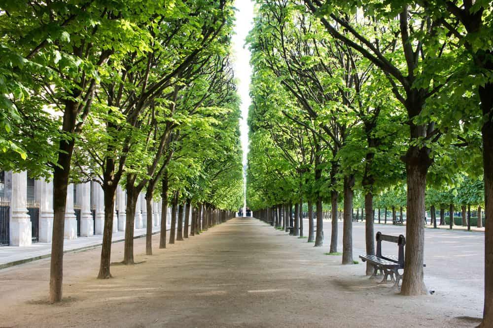 palais royal gardens paris france
