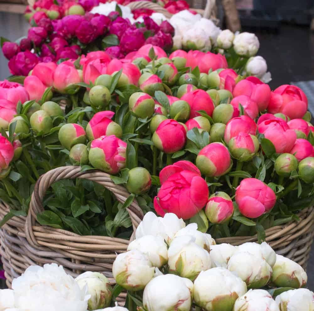 where to find peonies in Paris via everyday parisian rebecca plotnick