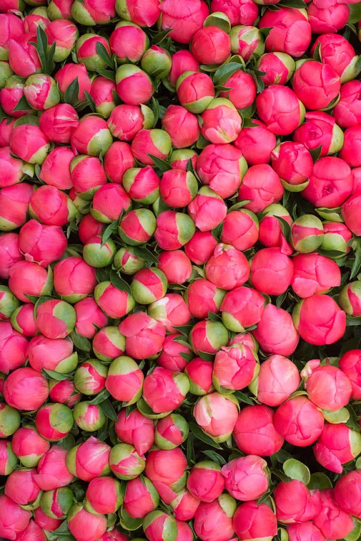 pink peonies in paris at the market via everyday parisian