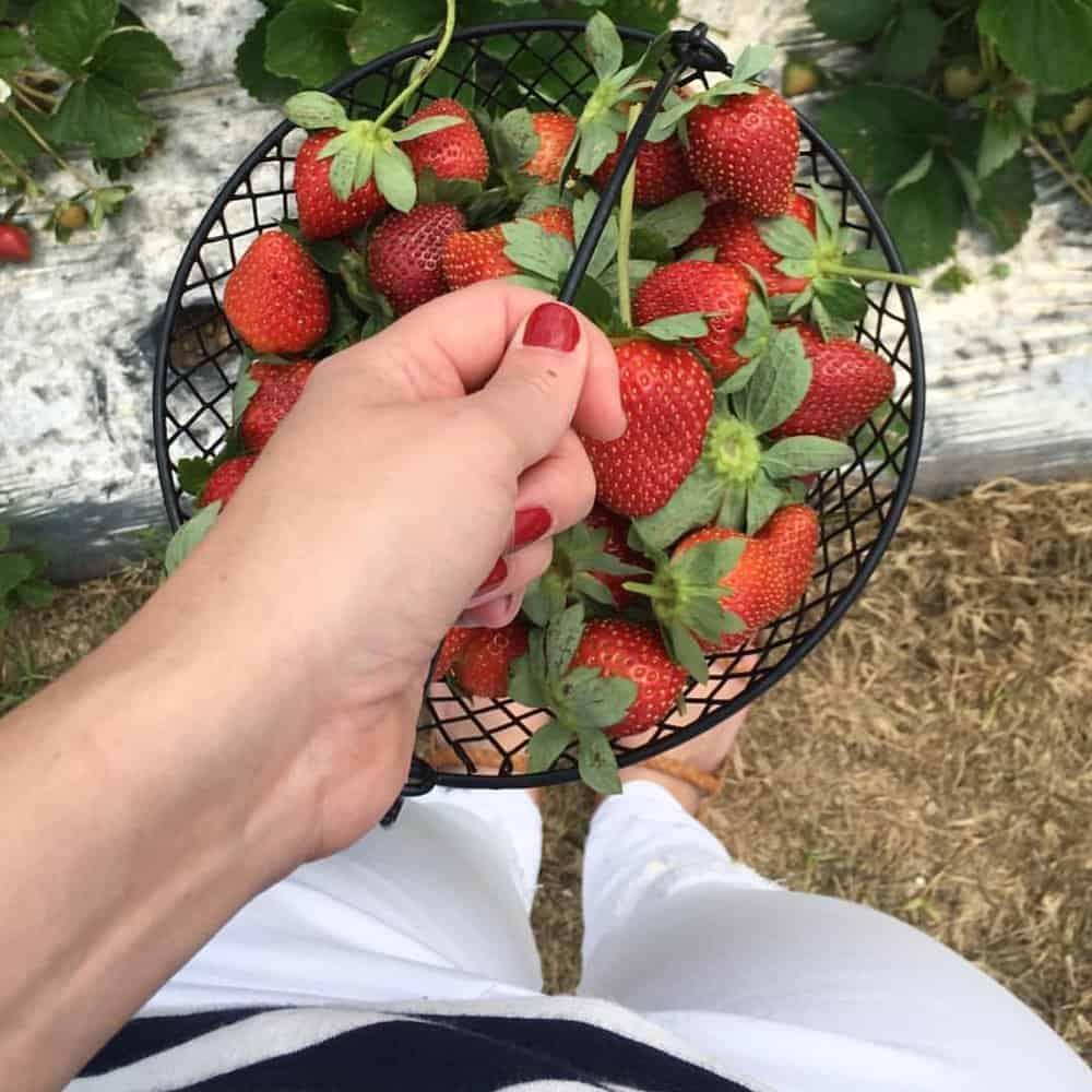 strawberries and stripes via everyday parisian