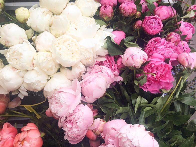 pink peonies in paris from everyday parisian @rebeccaplotnick