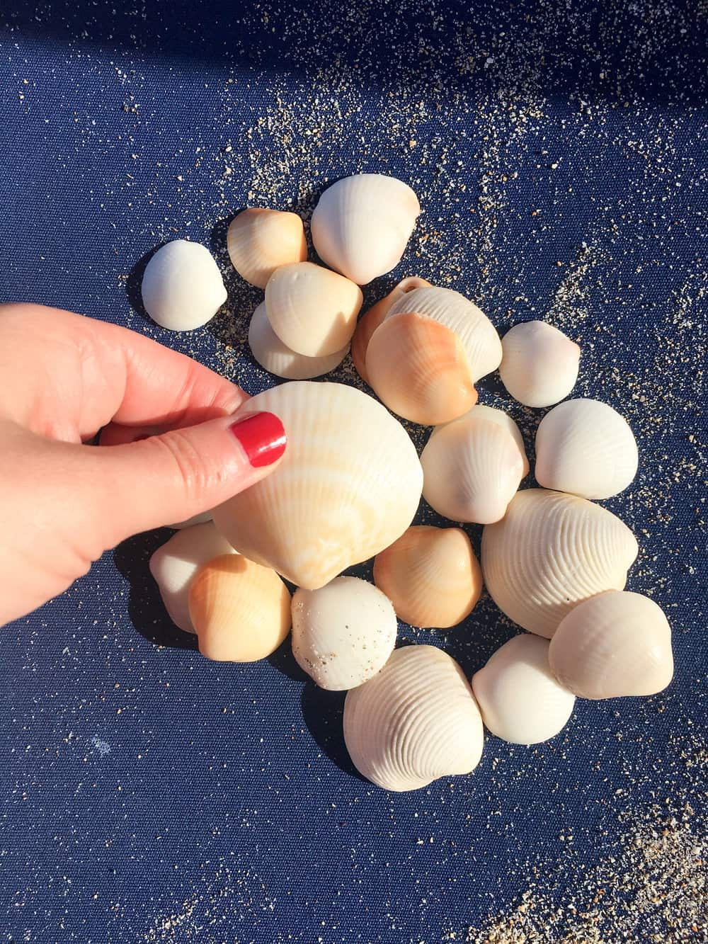 seashells @rebeccaplotnick florida singer island