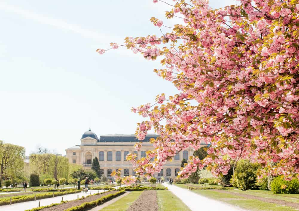 10 Places to See The Cherry Blossoms Bloom in Paris