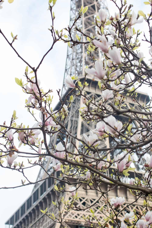 Shop Paris Magnolia Eiffel Tower Print Here