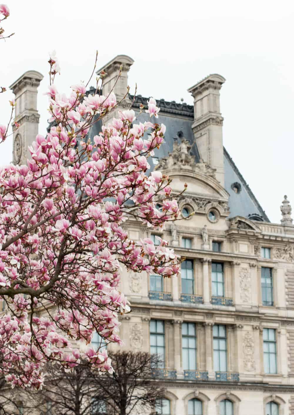 Shop Tuileries Magnolia Print Here