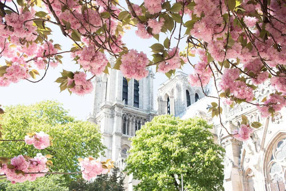 Shop Notre Dame in Paris Print Here