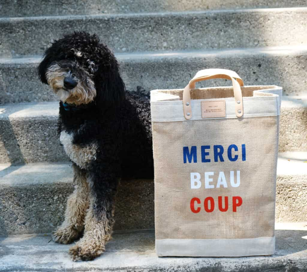dog with bag with print merci beau coup