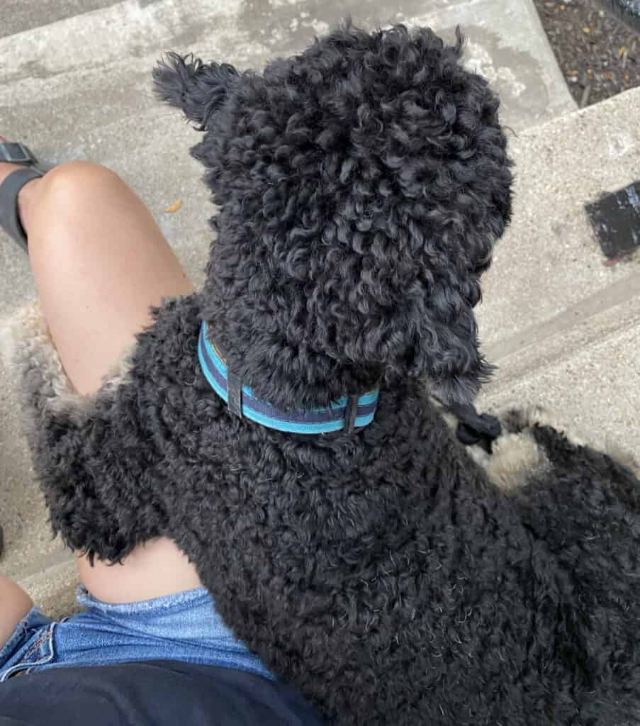 Life Lately with dog Henri