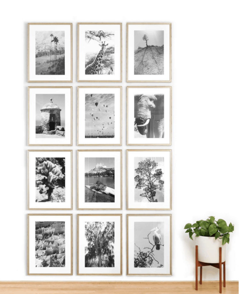 black and white images of animals for gallery wall